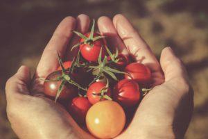 foodeducation_tomato